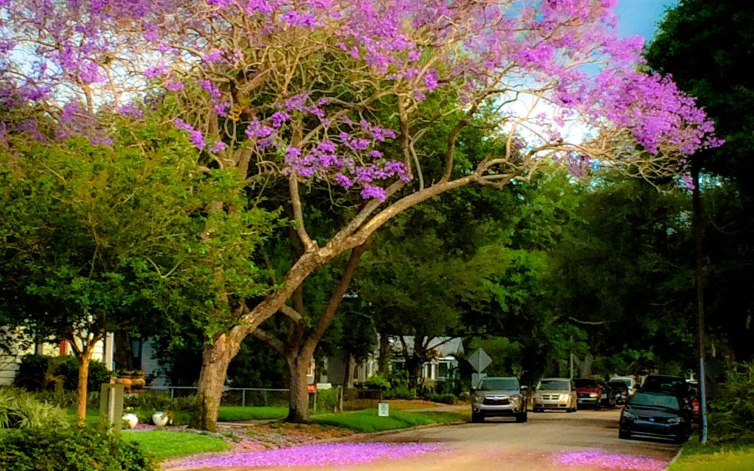 Trees of Florida